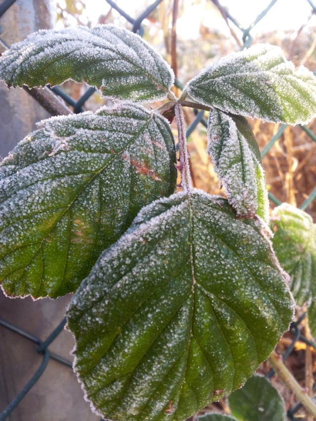 LuzPatterns.com_early_morning_frost_1_30